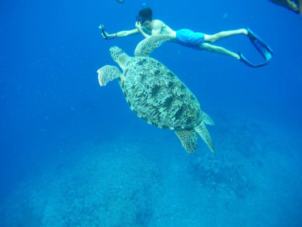 Gili-Meno-Turtle
